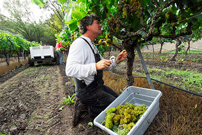 Greg La Follette on his Practice of Terroir