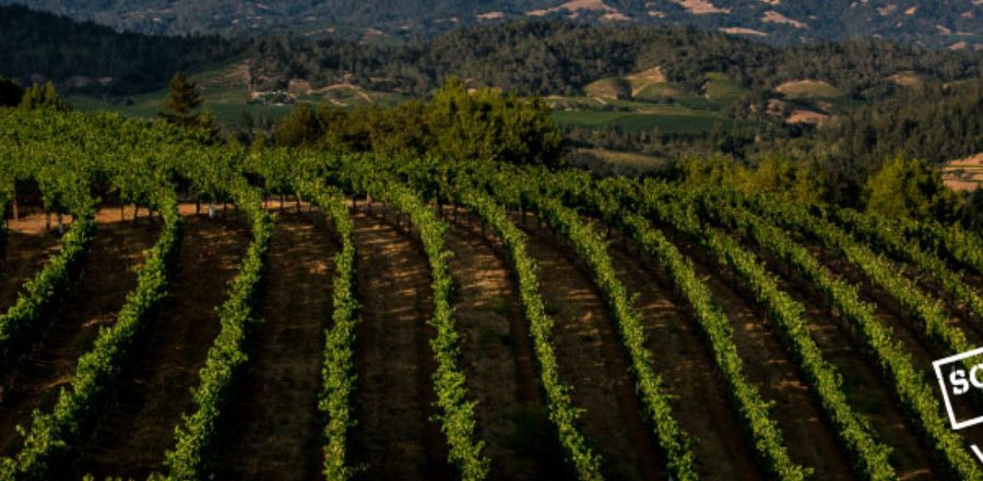 Sonoma County Wineries Expect Exceptional 2019 Values