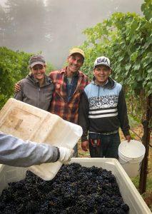 Harvest crew at van der Kamp Vineyard, Alquimista Cellars