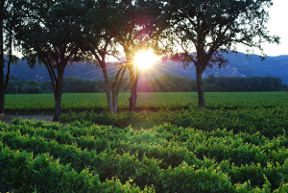 Sunrise over the Mayacamas